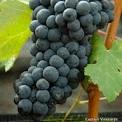 2014-09-20-vineyard-lunch